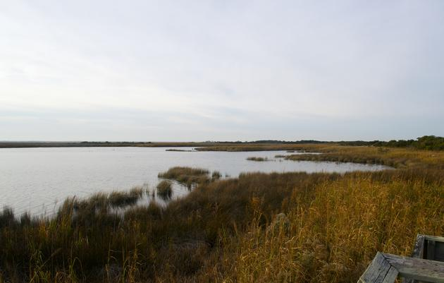 Audubon's Vision for Protecting Marshes at the Sanctuary