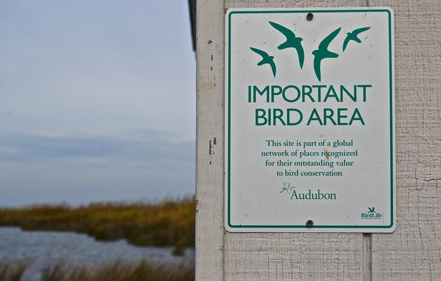 Birding at the Outer Banks