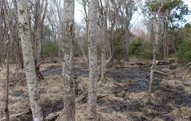 Maritime Swamp Forest