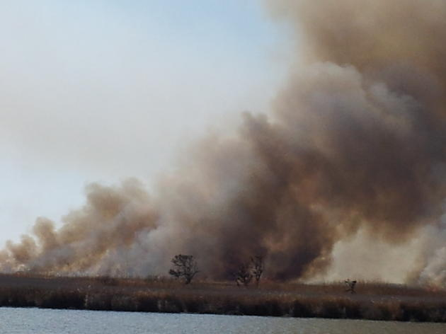 Controlled Burns Bring Life to the Marshes