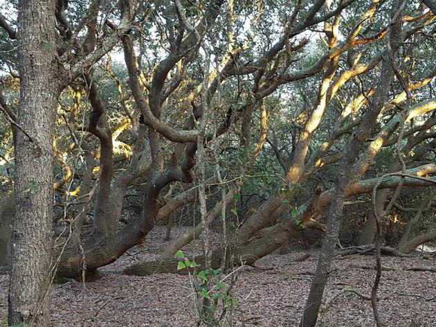 Maritime Evergreen Forest