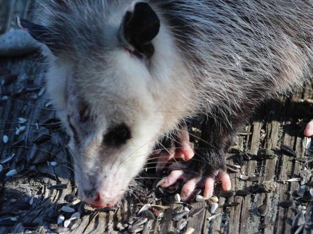 Mammals of Pine Island