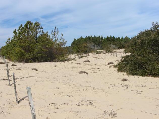 Stable Dune Barren
