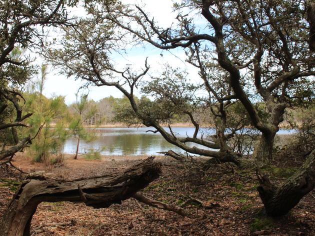 2016 Immersive Teacher Training at Pine Island Audubon Sanctuary