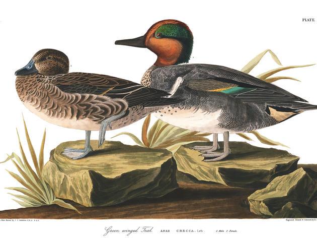 Bird List