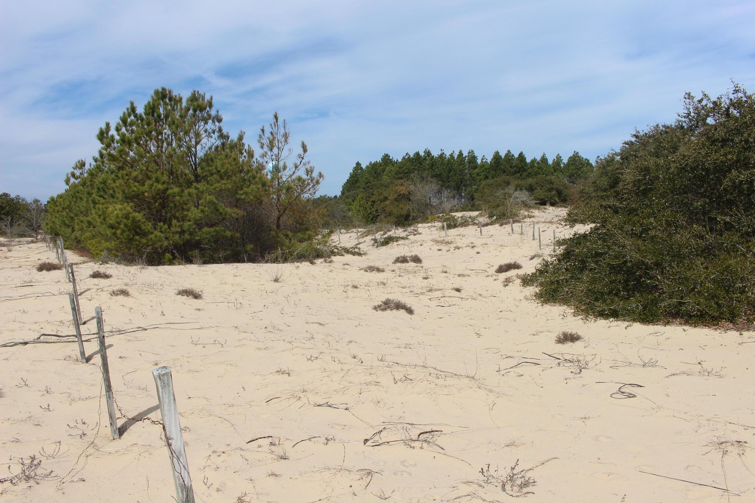 Dune Barren